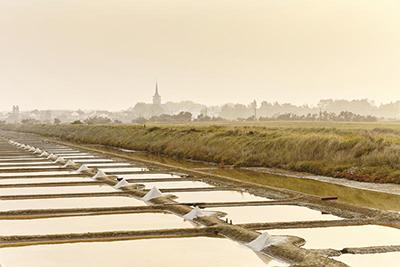 Marais de l'Île d'Olonne - Copyright Alexandre Lamoureux - Vendée Expansion
