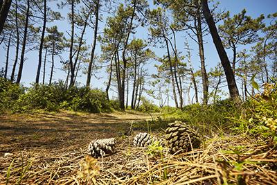 Forêt d'Olonne - Copyright Alexandre Lamoureux - Vendée Expansion